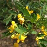 kronik kabızlıkta bitkisel tedavi